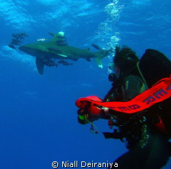 Daedalus Reef - Oceanic White tip shark, circling above s... by Niall Deiraniya 